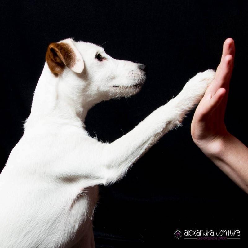 Les troubles du comportement canin | STUBBY