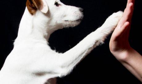 éducation de chien Vichy